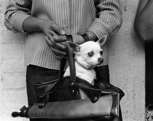 reagh-chihuahua-purse-1967-thumb-600x474-16777